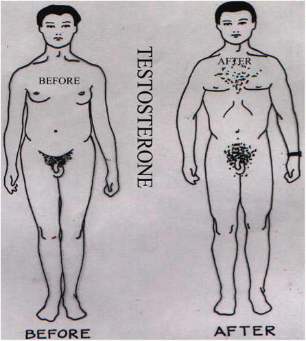 Illustration, testosterone, before and after.