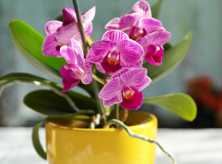 Photograph of orchid flowers